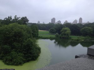 NEW YORK'DA BIR PARK,CENTRAL PARK NY